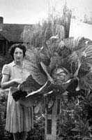 Sept 1949, Mrs. Dreany and Prize Cabbage