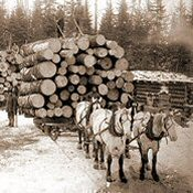Black and white photo of horses hauling logs